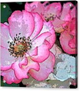 Rose 129 Acrylic Print by Pamela Cooper