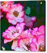 Rose 130 Acrylic Print by Pamela Cooper