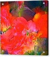 Rose 144 Acrylic Print