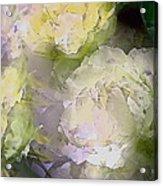 Rose 151 Acrylic Print