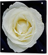 Rose 45 Acrylic Print