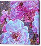 Rose 94 Acrylic Print