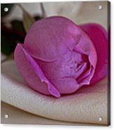 Rose And Silk Acrylic Print