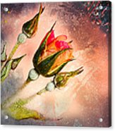 Rose Creation Acrylic Print