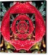 Rose Cut Acrylic Print