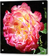 Rose Floral Fine Art Prints Pink Roses Flower Acrylic Print