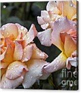 Rose Flower Series 7 Acrylic Print