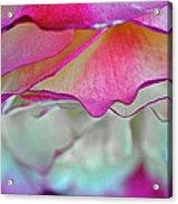 Rose Folds II Acrylic Print