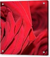 Rose For My Dad Acrylic Print