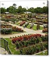 Rose Garden Park Tyler Texas Acrylic Print