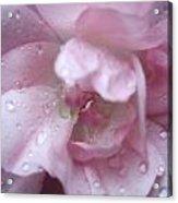 Rose II Acrylic Print
