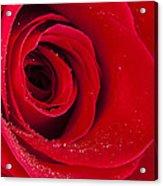 Rose Macro Wet 1 C Acrylic Print