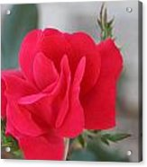 Rose Mount Acrylic Print by Bret Worrell