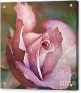 Rose Of Romance Acrylic Print