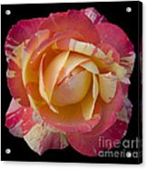 Rose On Black Acrylic Print