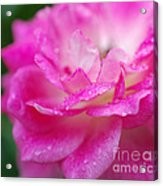 Rose Pink Acrylic Print