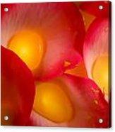Rose Pod Acrylic Print