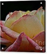 Rose Rising Acrylic Print