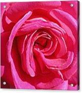 Rose Rose Acrylic Print