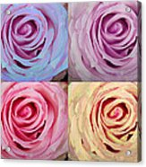 Rose Spiral Colorful Mix Acrylic Print