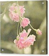 Rose Vine Acrylic Print