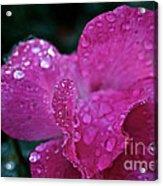 Rose Water Beads Acrylic Print