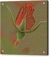 Rose With A Texture Acrylic Print