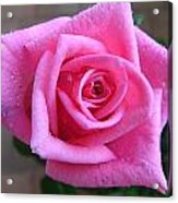 Rose With Droplets Acrylic Print