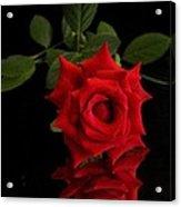 Rose2 Acrylic Print