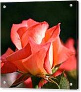 Rosebud Folklore Acrylic Print