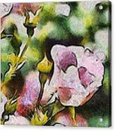 Roses At The Shrine Acrylic Print