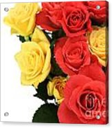 Roses Closeup Acrylic Print