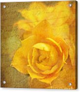 Roses For Remembrance Acrylic Print