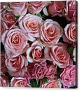 Roses Galore Acrylic Print