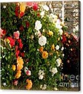 Roses Roses Everywhere Acrylic Print