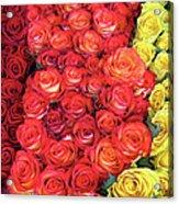 Roses Roses Roses Acrylic Print