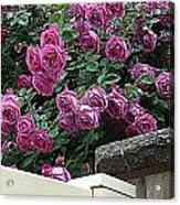 Rosiage Acrylic Print