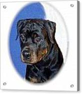 Rottweiler 1437 Acrylic Print