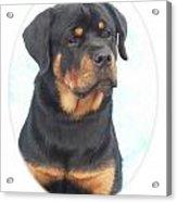 Rottweiler 425 Acrylic Print