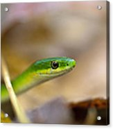 Rough Green Snake Acrylic Print