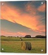 Round Hay Bales Acrylic Print
