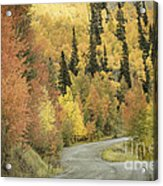 Routt National Forest Acrylic Print
