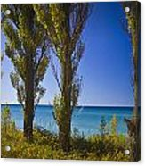 Row Of Cypress Trees At Point Betsie In Michigan No.0924 Acrylic Print