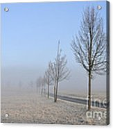 Row Of Trees In The Morning Acrylic Print