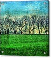 Row Of Trees Acrylic Print