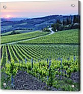 Rows Of Grapevines At Sunset Acrylic Print by Jeremy Woodhouse