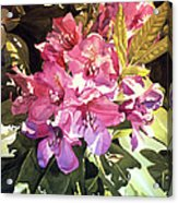 Royal Rhododendron Acrylic Print by David Lloyd Glover