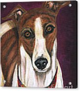 Royalty - Greyhound Painting Acrylic Print by Michelle Wrighton