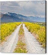 Ruby Mountains Wildflower Road Acrylic Print by Sheri Van Wert