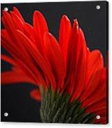Ruby Red Acrylic Print